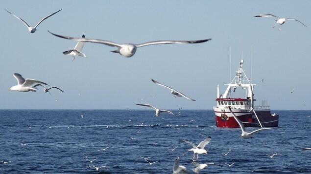 Photo de goélands devant un bateau