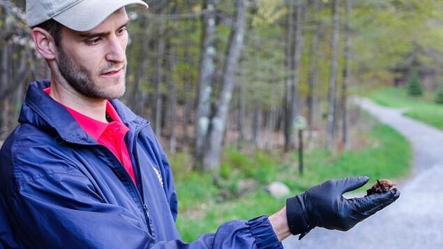 Louis Lazure, biologiste et coordonnateur recherche et conservation au Zoo de Granby, tient une grande chauve-souris brune dans ses mains avant de la libérer à la Ferme Héritage Miner