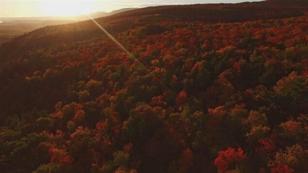 Paysage d'automne en vue aérienne, les feuilles des arbres sont de teinte rouge et orangé.
