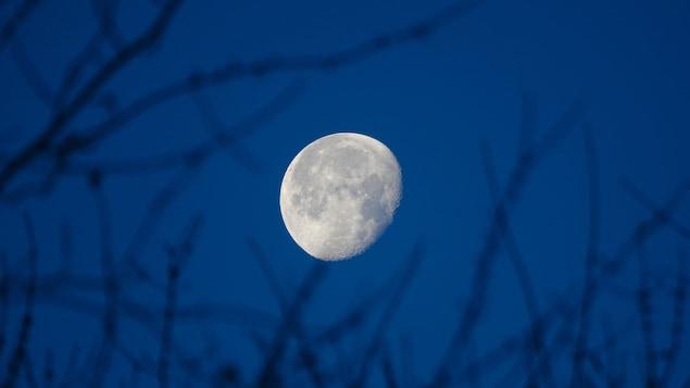 La Lune, presque pleine, se découpe sur une ciel bleu nuit.