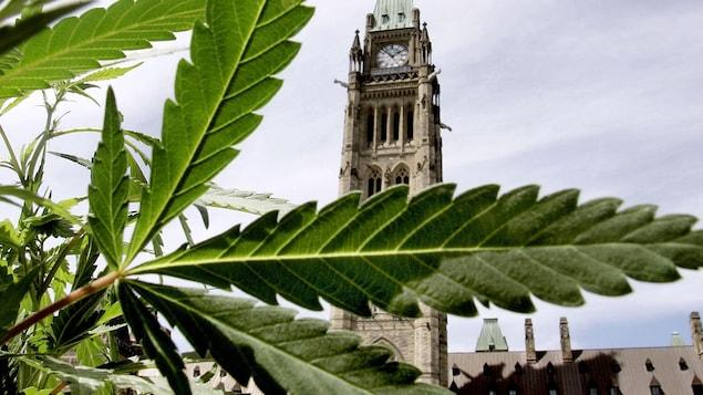 Une feuille de marijuana en premier plan et en arrière vue sur le parlement d'Ottawa.