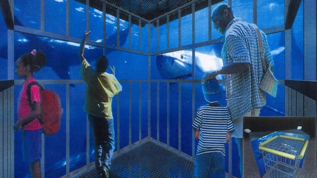 Croquis d'une cage à requins