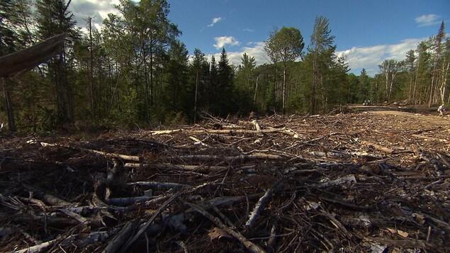 Des arbres morts jonchent le sol au coeur d'une forêt dans Lanaudière.