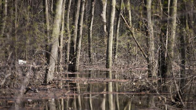 L'intérieur du boisé situé dans la zone inondée.