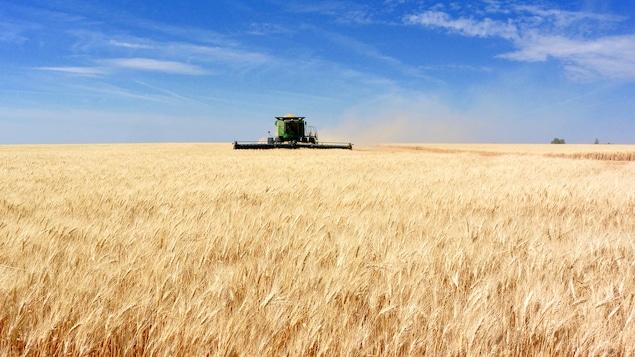 On voit une moissonneuse dans un champ de blé.