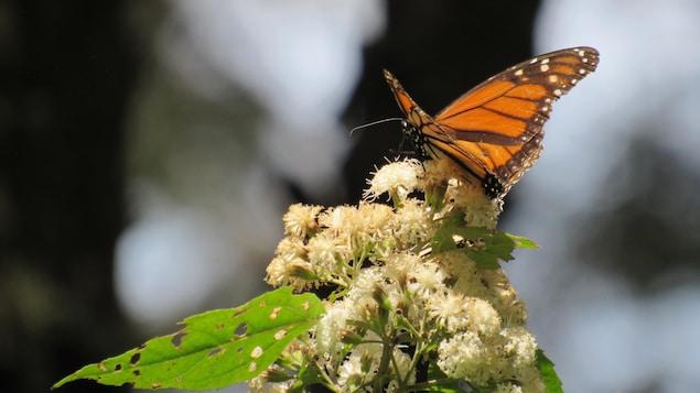 Le papillon s'est posé sur une fleur.