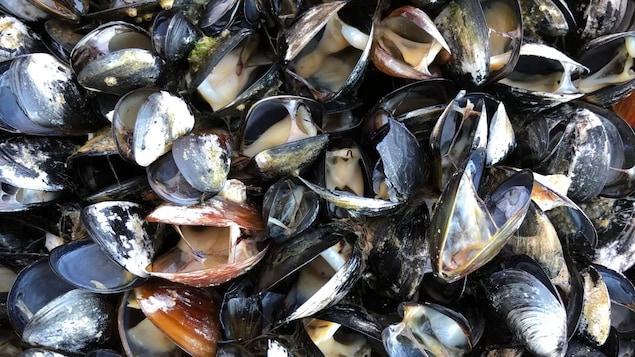 高温导致海水温度升高,大量贝类死亡。