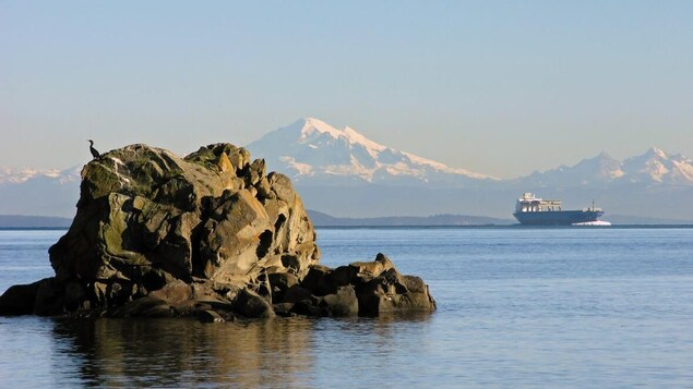 Un cargo ancré au large avec en arrière-plan les montagnes et en avant-plan un roché où sont posés des oiseaux marins.
