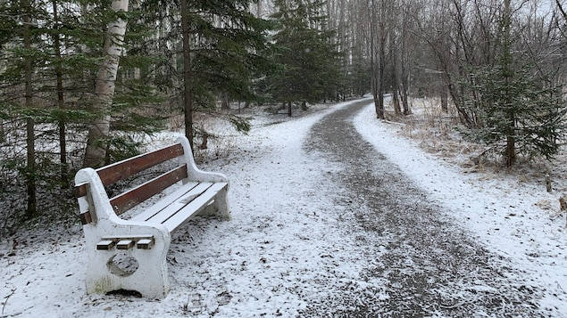 La neige couvre le sol d'une forêt de Rouyn-Noranda.