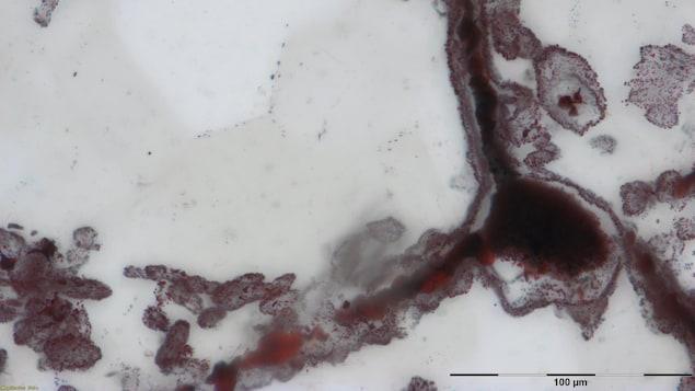 Les restes de micro-organismes sous forme de minuscules filaments découverts dans la ceinture de roches vertes Nuvvuagittuq, dans le nord du Québec.