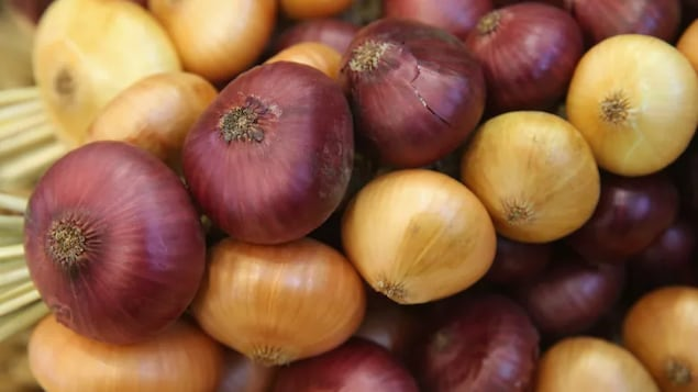 Various onions are seen on display at an agricultural trade fair in Berlin in January 2015. The Canadian Food Inspection Agency has recalled whole red, yellow and white raw onions after U.S. health officials linked the vegetables to a salmonella outbreak.