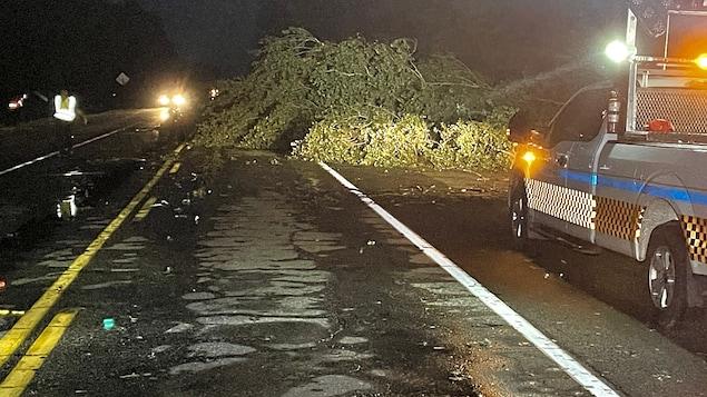 Un arbres bloque partiellement une route, tandis qu'un policier contrôle la circulation.