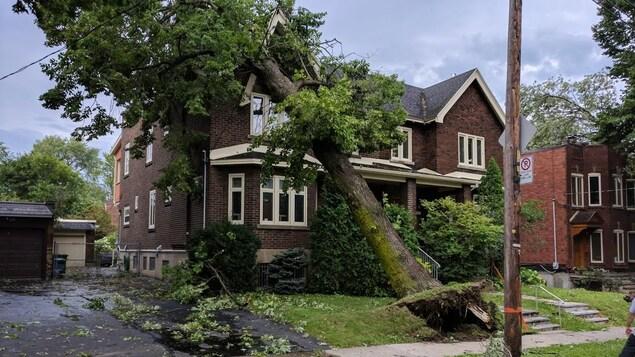 Un arbre s'abat sur une maison dans Côte-des-Neiges-Notre-Dame-de-Grâce après le passage des orages violents.