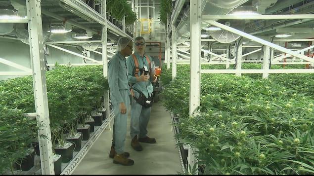 L'usine de production de marijuana à Moncton, au Nouveau-Brunswick.