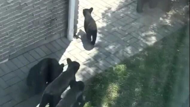 Des oursons près d'une maison.
