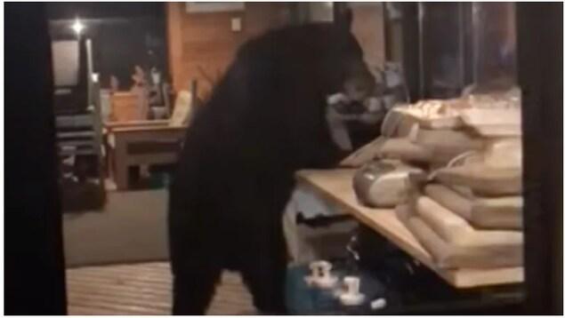 Un ours noir, debout sur ses deux pattes arrières