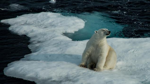 Un ours polaire assis sur une masse de glace dans le détroit de Lancaster, près de l'île de Baffin.