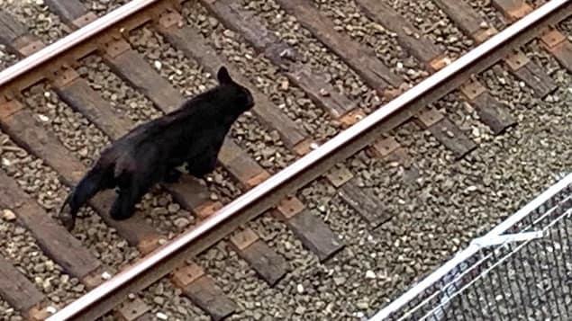 Un ours se promène sur une voie ferrée.