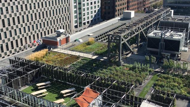 Le toit vert du Palais des congrès de Montréal
