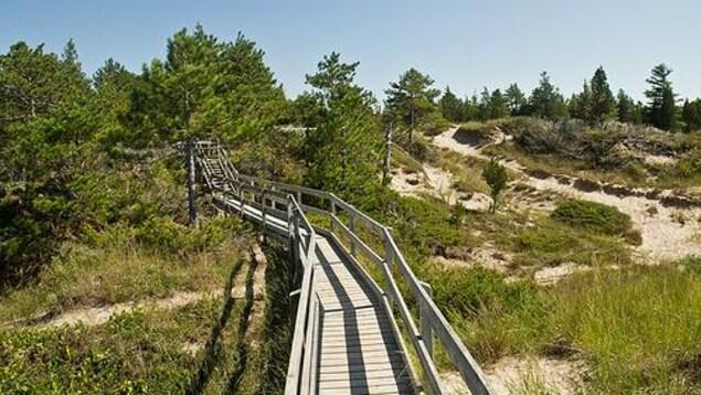 Une promenade en bois dans une zone protégée.