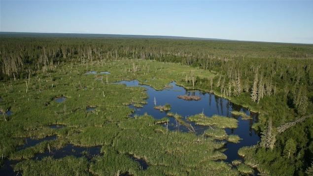 Image aérienne du parc national Wood Buffalo : arbres et marécages.