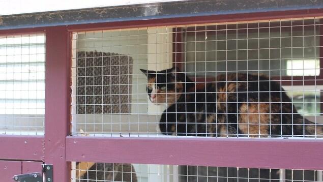 Un enclos grillagé où un chat observe l'extérieur.
