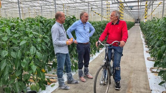 Trois hommes réunis dans une serre près de plants de poivrons.