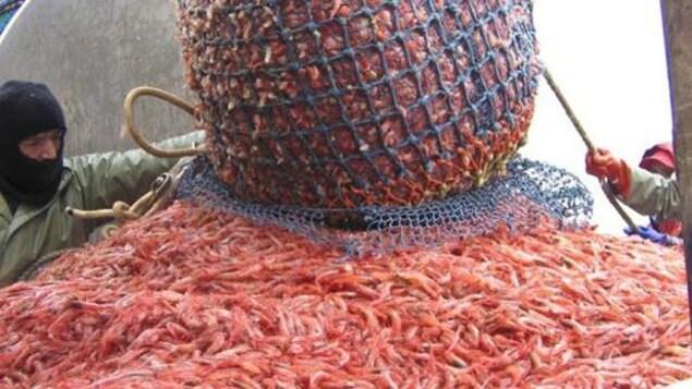 Un filet plein de crevettes