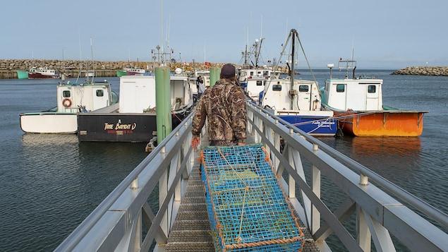 Un homme marche vers des bateaux en traînant derrière lui un casier à homard.