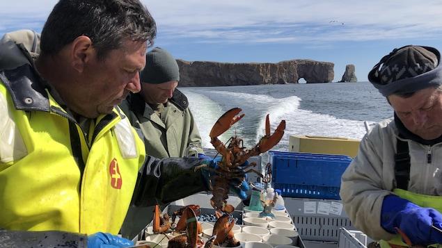 Trois pêcheurs trient les homards capturés sur le bateau. Derrière eux, le rocher Percé se dresse au-dessus de la mer.