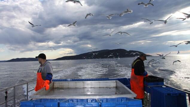On se prépare à relever les cages pour les crabes