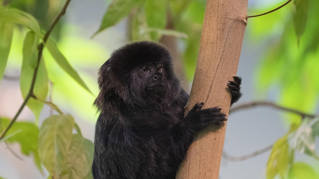 Un petit singe accroché à une branche d'arbre.