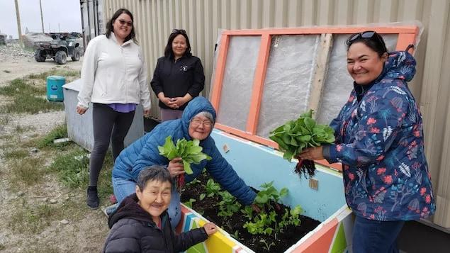 Des femmes récoltent des légumes dans une plate-bande collée contre un bâtiment au Nunavik.