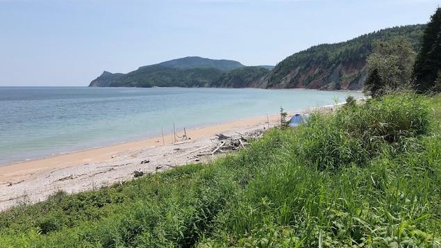 Vue de la plage, en premier plan de la verdure et des bussions, plus loin le sable et les eaux turquoises de la mer.