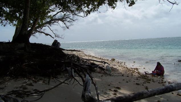 Une dame ramasse des coquillages sur la plage.