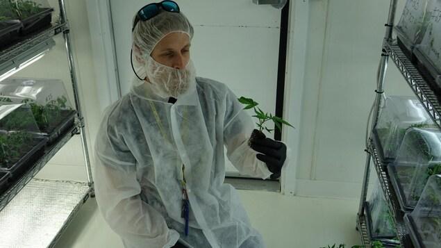 Le vice-président d'Aurora Cannabis, Cam Batlley, tient un plant de cannabis prêt à être transplanté.