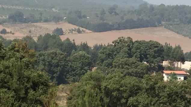 Des cultures entourées de forêts