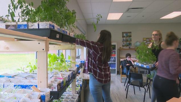 Des élèves poussent des plantes à l'intérieur.