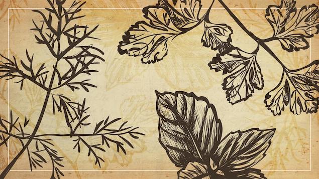 La photo montre des illustrations d'herbes aromatiques sur un fond de parchemin.