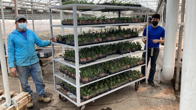 Deux travailleurs montrent un étalage de plants.