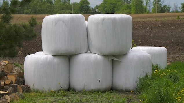 Des bottes de foin entourées de plastique blanc, dans un champ.