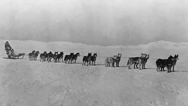 Photo en noir et blanc un traîneau tiré par des chiens