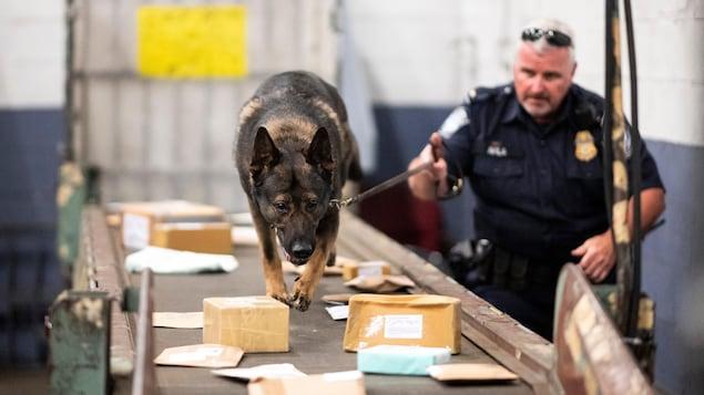 Un officier et son chien cherche de la drogue dans des lettres à l'aéroport John F. Kennedy, à New York, le 24 juin 2019.