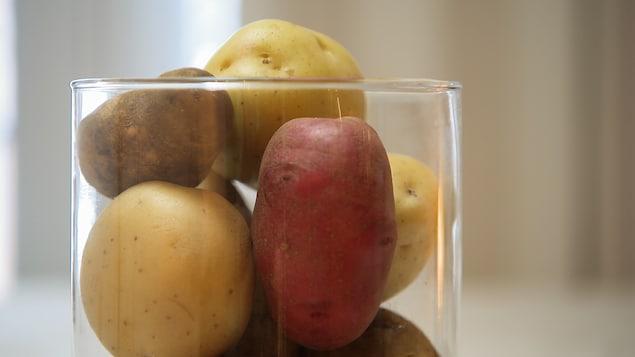 Des pommes de terre blanches, rouges et jaunes dans un vase transparent.