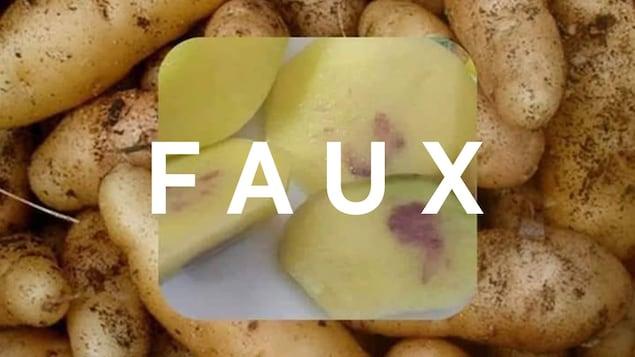 Des pommes de terre, dont certaines sont tranchées et où on voit des taches violettes. Le mot FAUX est écrit sur la photo.