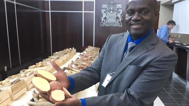 Un chercheur montre des pommes de terre