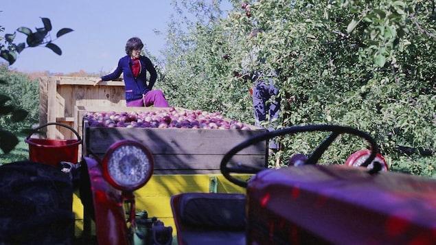 Une femme, juchée sur la charrette d'un tracteur, discute avec un homme qui cueille des pommes dans un verger.