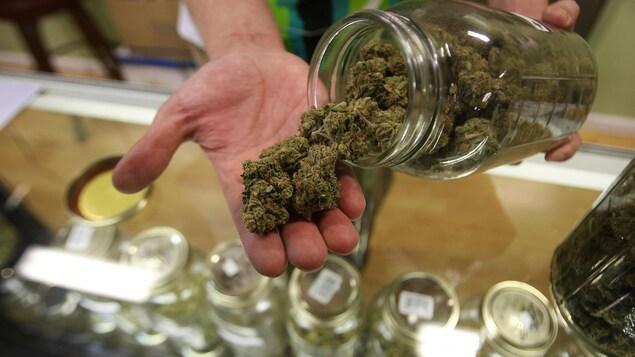 Un homme sort de la marijuana médicale d'un pot.