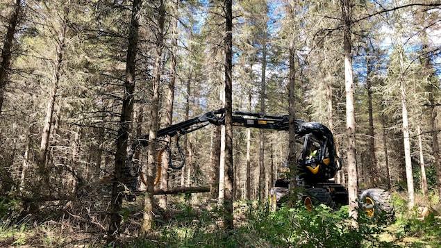 Un producteur forestier en forêt