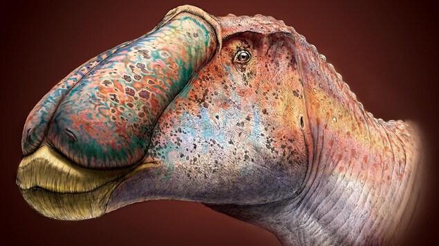 Un dessin en couleur du Prosaurolophus